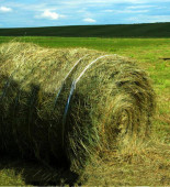 grass071